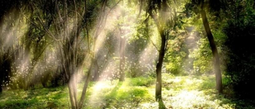 Superstitii si legende magice despre noaptea de Sanziene