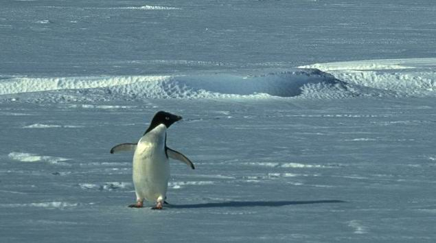 Atentie! Un pinguin la bord...