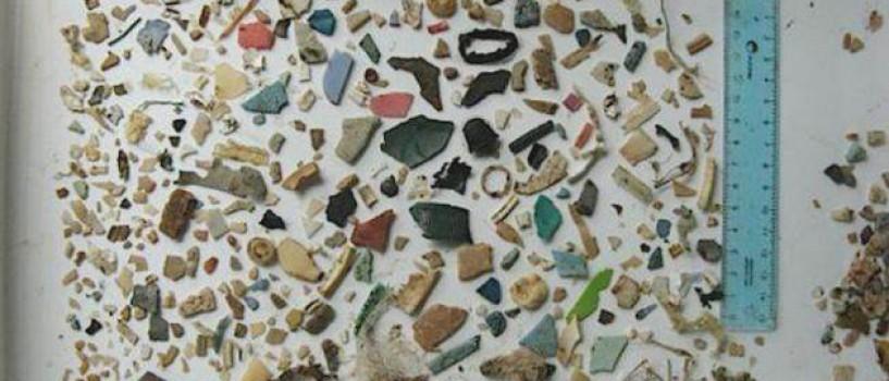 Sute de resturi de plastic au fost gasite in stomacul unei broaste testoase