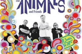 The Animals & Friends concerteaza sambata in Jukebox Club!
