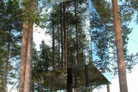 In Suedia te poti caza intr-un copac!