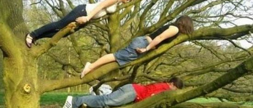 Planking-mania face victime!