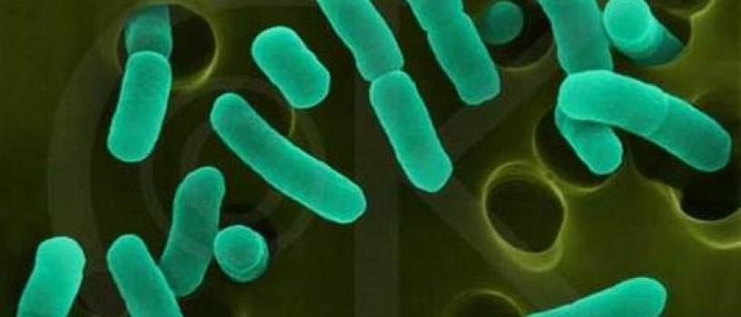 Epidemia de E.coli e provocata de o tulpina nemaiintalnita pana acum!