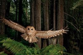 Cum iau nastere Fotografiile Memorabile? Vedeti din 2 iulie, la National Geographic!