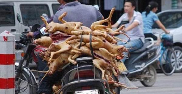 15 000 de caini au fost sacrificati pentru un festival gastronomic in China!