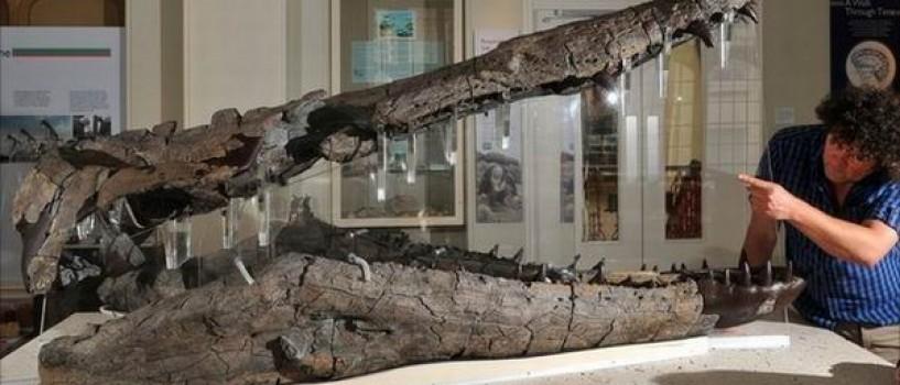 Craniul unuia dintre cei mai inspaimantatori monstri marini – expus la muzeul din Dorset!