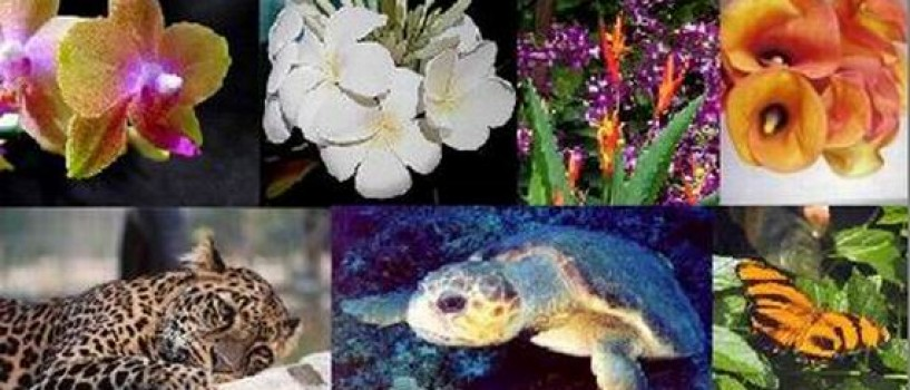 Pamantul adaposteste 8,7 milioane de specii!