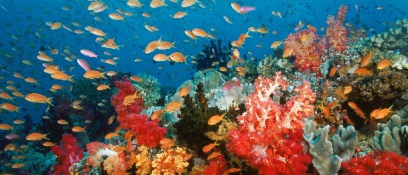 Calatorie in adancul oceanelor, sambata, la CineTePrinde!