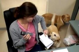 """Cainele = cea mai buna """"asistenta personala"""" pe care o poti avea! Dovada? (VIDEO)"""