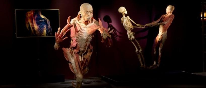 EXPOZIȚIA THE HUMAN BODY, în premieră în România, la Muzeul Antipa!