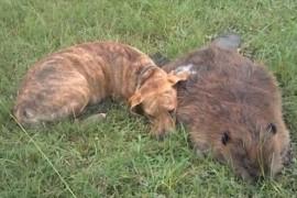 Iti va frange inima dar merita sa vezi: un caine isi plange cel mai bun prieten (VIDEO)