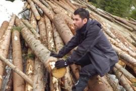 3 ha/ oră – viteza cu care au dispărut pădurile de la Revoluţie încoace!