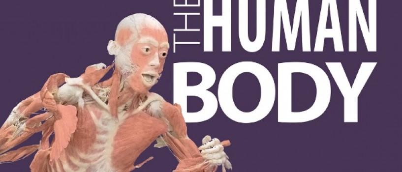 Programul expoziției THE HUMAN BODY în Noaptea Muzeelor