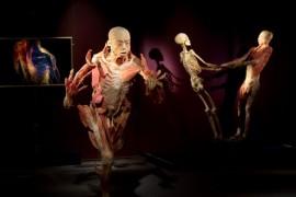 Ziua Artei la expoziția THE HUMAN BODY