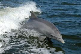 Delfinii se striga pe nume!