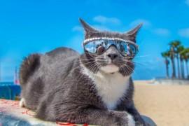 Trista poveste a lui Bagel, cea mai cool pisica de pe internet!