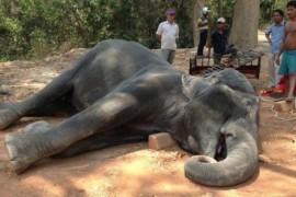 Zeci de mii de oameni din intreaga lume spun STOP exploatarii elefantilor!