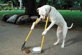 Primaria din Madrid a declansat razboiul excrementelor canine!
