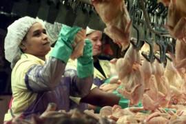 Muncitorii din fermele de pui americane, obligati sa poarte pampersi!