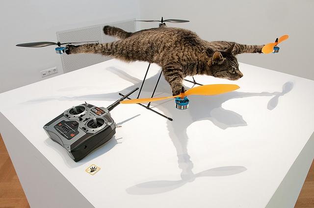 pisica drona