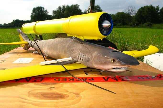rechin drona