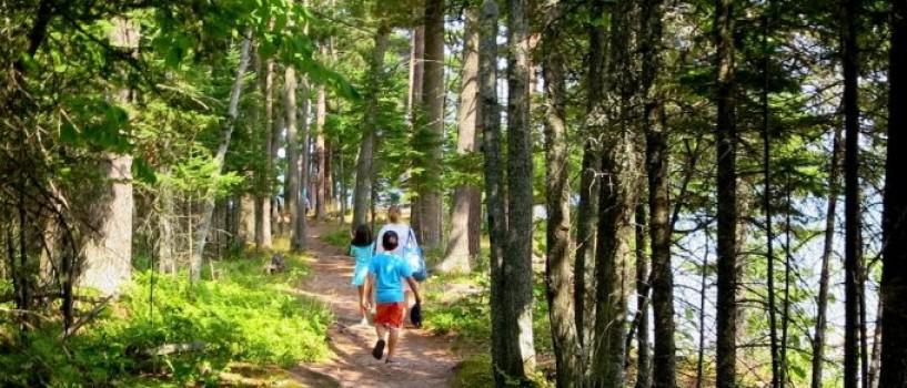 Ce poti face pentru a preveni muscaturile de capuse la copii?
