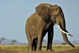 VIDEO: Un elefant de la zoo a ucis o fetita aruncandu-i cu o piatra in cap!