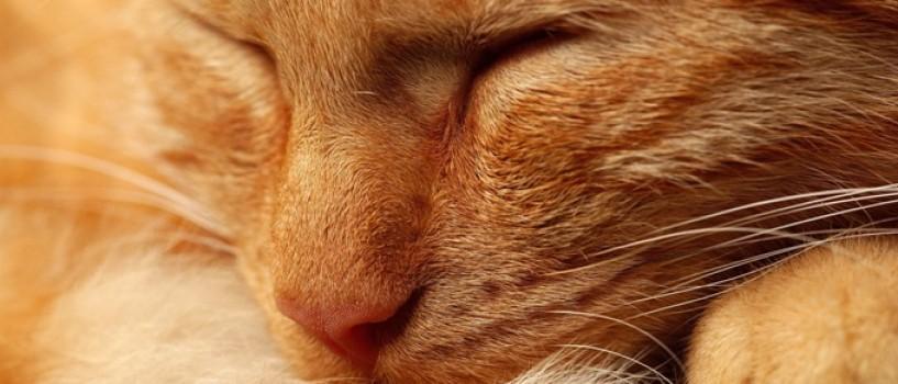 Provocare: gasiti pisica din fotografia de mai jos!