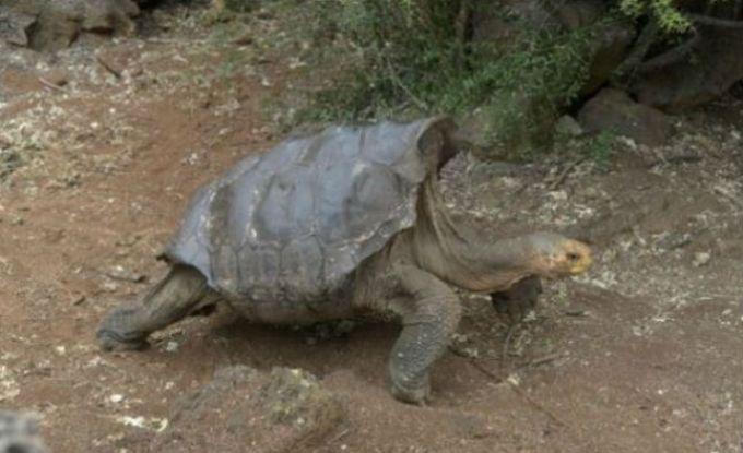 O testoasa a facut atat de mult sex incat si-a salvat specia de la disparitie!
