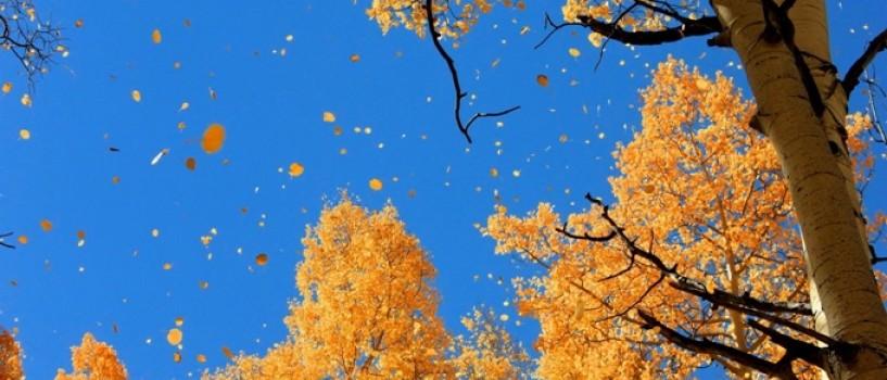 De ce e mai albastru cerul toamna?