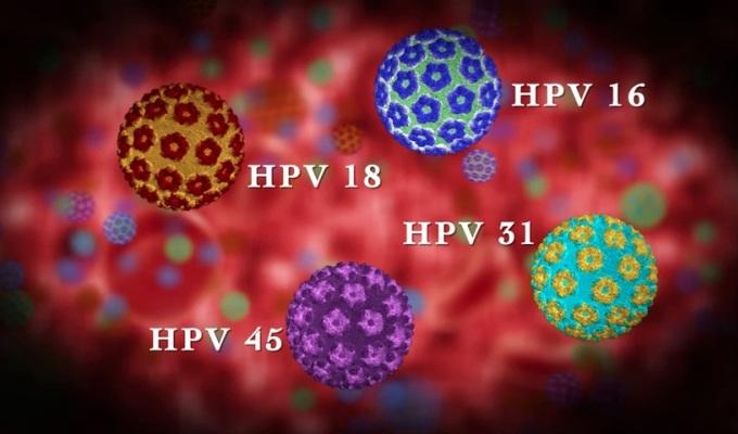 1 din 4 indivizi sunt infectati cu HPV, dar ce este de fapt HPV?