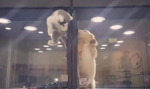 VIDEO: Iata ce se intampla cand o pisicuta vrea sa se joace cu un catelus…