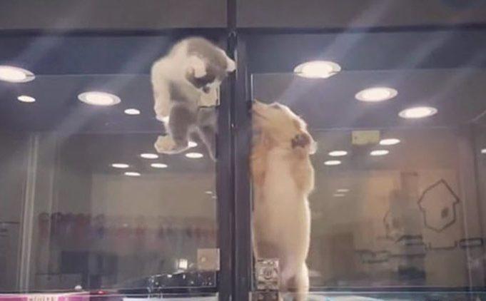 VIDEO: Iata ce se intampla cand o pisicuta vrea sa se joace cu un catelus...