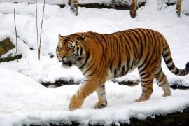 Doua treimi din animale vor disparea pana in 2020!
