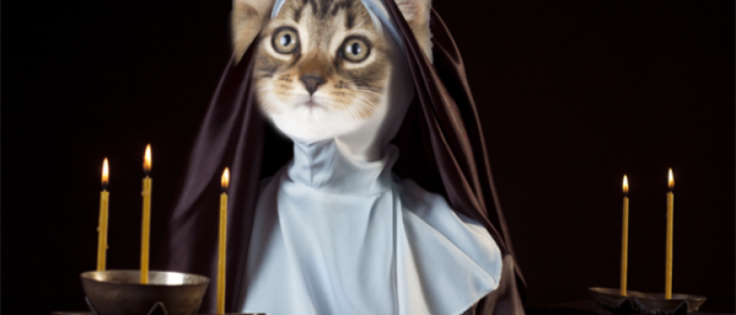Femeia toxica, maicutele care au inceput sa miaune si alte curiozitati la fel de ciudate!