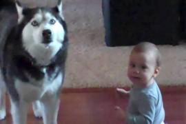 VIDEO: Un bebelus vorbeste cu un caine. Conversatia lor e de-a dreptul fascinanta!
