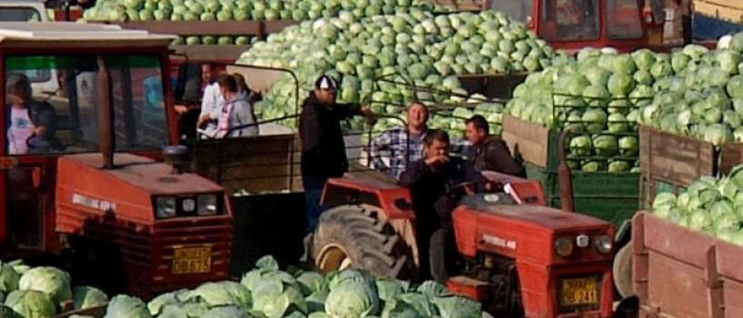 Varza, cartofi si alti demoni sau… agricultura romaneasca vazuta prin ochii unui regizor!