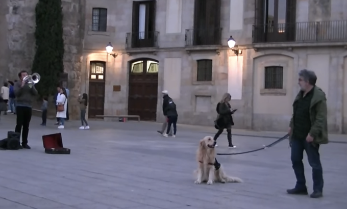 VIDEO: Acest caine sensibil a tinut mortis sa asculte pana la capat reprezentatia unui artist stradal!