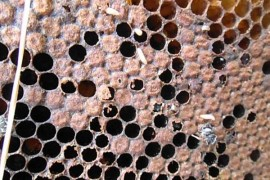 Viermii care mananca plastic ne-ar putea scapa de tone de deseuri!
