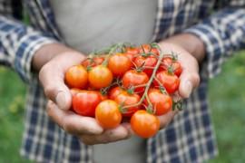 Cand au devenit rosiile legal legume?