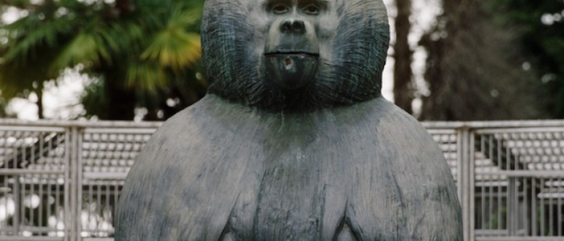Ouale lui Tarzan, un documentar halucinant regizat de Alexandru Solomon, in premiera mondiala la TIFF