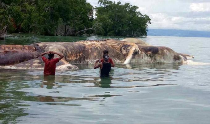 Oamenii de stiinta au solutionat misterul monstrului din Indonezia!