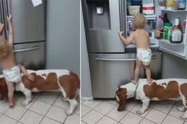 VIDEO: Ce faci cand esti prea mic ca sa ajungi la mancarea din frigider? Raspunsul e dragalas foc!