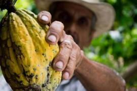 Aceste alimente ar putea disparea curand din cauza schimbarilor climatice!