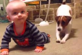 VIDEO: Un caine invata un bebelus sa se tarasca. Uite cat sunt de simpatici!