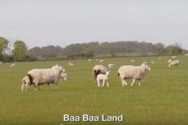 Baa Baa Land sau cel mai plictisitor film din lume, se lanseaza in septembrie!