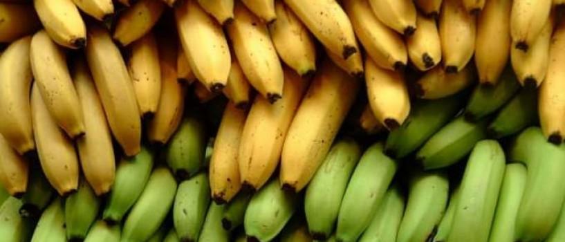 Oamenii de stiinta au creat bananele care ar putea salva vieti!