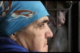Ouale lui Tarzan, in competitia celui mai important festival de film documentar din Rusia!