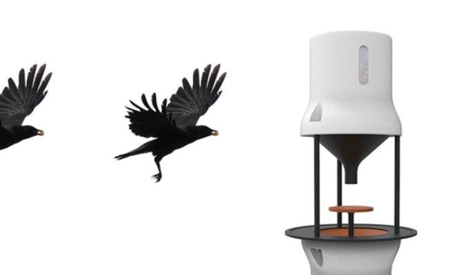 Un start-up olandez vrea sa dreseze ciorile sa adune mucurile de tigara de pe jos!
