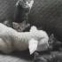 VIDEO: O prietenie inedita s-a legat intre un miel si… niste pisicute